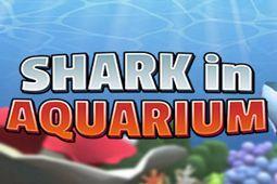 鲨鱼在水族馆